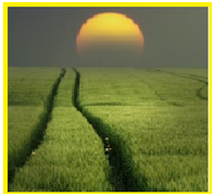 buğdayınyarınları
