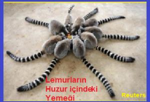 Lemurlar