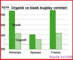 Organik11 buğdayverimi